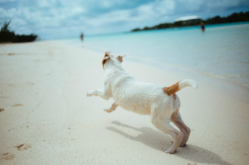 hond rennend over strand